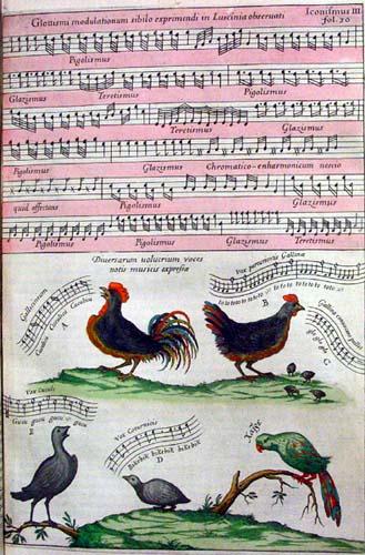 kircher birds